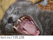 Купить «Русская голубая кошка хочет есть», фото № 135238, снято 29 декабря 2006 г. (c) Устинов Дмитрий Николаевич / Фотобанк Лори