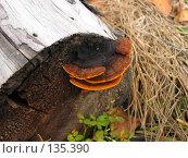 Купить «Древесный гриб», фото № 135390, снято 15 сентября 2007 г. (c) Кукуруза Михаил Петрович / Фотобанк Лори