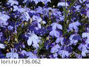 Купить «Цветы петергофа», фото № 136062, снято 20 июля 2006 г. (c) Юлия Севастьянова / Фотобанк Лори