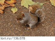 Купить «Белка ест орех», фото № 136078, снято 6 ноября 2007 г. (c) Юлия Севастьянова / Фотобанк Лори