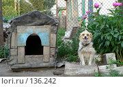 Купить «Сторожевой пес», фото № 136242, снято 27 апреля 2018 г. (c) Вера Тропынина / Фотобанк Лори