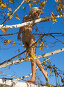 Блондинка на дереве, фото № 138294, снято 18 сентября 2005 г. (c) Serg Zastavkin / Фотобанк Лори