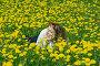 Девушка на лужайке с одуванчиками, фото № 139166, снято 18 мая 2007 г. (c) Дмитрий Ощепков / Фотобанк Лори