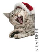 Купить «Серая кошка зевает рядом с новогодним колпаком», фото № 139818, снято 20 ноября 2007 г. (c) Останина Екатерина / Фотобанк Лори
