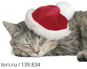 Купить «Серая кошка спит в новогоднем колпаке», фото № 139834, снято 20 ноября 2007 г. (c) Останина Екатерина / Фотобанк Лори