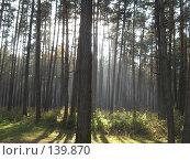 Купить «Сказочный лес», фото № 139870, снято 26 октября 2007 г. (c) Алексей / Фотобанк Лори