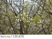 Купить «Весна», фото № 139878, снято 6 мая 2007 г. (c) Юлия Севастьянова / Фотобанк Лори