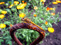 Стрекоза, фото № 140818, снято 14 июля 2007 г. (c) Мурад / Фотобанк Лори