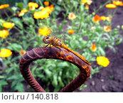 Купить «Стрекоза», фото № 140818, снято 14 июля 2007 г. (c) Мурад / Фотобанк Лори