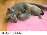 Купить «Кошка кормит котят», фото № 143322, снято 23 мая 2018 г. (c) Игорь Соколов / Фотобанк Лори