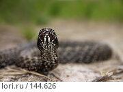 Купить «Змея перед броском», фото № 144626, снято 27 апреля 2006 г. (c) Максим Горпенюк / Фотобанк Лори