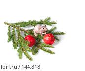 Купить «Крыса даёт лапку», фото № 144818, снято 23 сентября 2007 г. (c) Иван / Фотобанк Лори