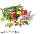 Купить «Крысы бдят», фото № 144822, снято 23 сентября 2007 г. (c) Иван / Фотобанк Лори