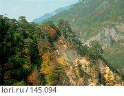 Купить «Вековые сосны на склоне природного заповедника, Черногория», фото № 145094, снято 19 августа 2019 г. (c) Fro / Фотобанк Лори