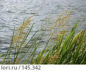 Купить «Трава у реки», фото № 145342, снято 1 сентября 2007 г. (c) Андрей Шуленко / Фотобанк Лори