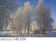 Синий, синий иней... Стоковое фото, фотограф Герман Филатов / Фотобанк Лори