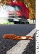 Купить «Мертвая белка», фото № 147778, снято 27 сентября 2004 г. (c) hunta / Фотобанк Лори
