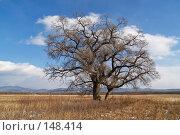 Купить «Одинокий ильм, зима», фото № 148414, снято 2 декабря 2007 г. (c) Олег Рубик / Фотобанк Лори