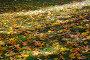 Красивый ковер из осенних листьев, фото № 148730, снято 23 сентября 2007 г. (c) Светлана Силецкая / Фотобанк Лори