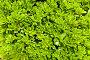 Фон из зеленых листьев, фото № 149026, снято 8 августа 2007 г. (c) chaoss / Фотобанк Лори