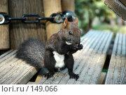 Купить «Ручная Белка», фото № 149066, снято 6 сентября 2007 г. (c) Максим Яковлев / Фотобанк Лори