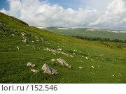 Купить «Альпийские луга. Плато Лаго-Наки. Кавказский заповедник», фото № 152546, снято 10 августа 2007 г. (c) Петухов Геннадий / Фотобанк Лори