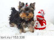 Купить «Щенок йоркширского терьера  рядом со снеговиком», фото № 153338, снято 23 сентября 2007 г. (c) Ирина Мойсеева / Фотобанк Лори
