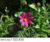 Купить «Красный цветок», фото № 153830, снято 7 сентября 2007 г. (c) Иван Мацкевич / Фотобанк Лори