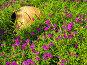 Керамическая ваза,лежащая среди полевых цветов, фото № 154166, снято 8 августа 2007 г. (c) Светлана Силецкая / Фотобанк Лори
