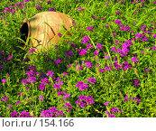Купить «Керамическая ваза,лежащая среди полевых цветов», фото № 154166, снято 8 августа 2007 г. (c) Светлана Силецкая / Фотобанк Лори