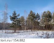 Купить «Кедровая молодежь», фото № 154882, снято 19 декабря 2007 г. (c) Олег Рубик / Фотобанк Лори
