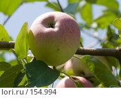 Купить «Красное яблоко», фото № 154994, снято 18 сентября 2018 г. (c) SummeRain / Фотобанк Лори
