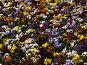 Клумба с цветами, фото № 155098, снято 4 июня 2006 г. (c) Дмитрий Тарасов / Фотобанк Лори