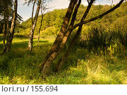 """Купить «Особо охраняемая природная территория """"Битцевский лес""""», фото № 155694, снято 4 сентября 2007 г. (c) Петухов Геннадий / Фотобанк Лори"""