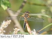Купить «Большая стрекоза крупным планом», фото № 157314, снято 5 июня 2006 г. (c) Андрей Ерофеев / Фотобанк Лори