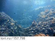 Купить «Подводный мир», фото № 157798, снято 17 августа 2007 г. (c) Карасева Екатерина Олеговна / Фотобанк Лори