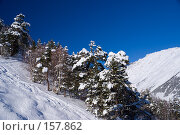 Купить «Заснеженные деревья на склоне Чегета», фото № 157862, снято 15 декабря 2007 г. (c) Борис Панасюк / Фотобанк Лори