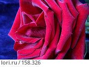 Купить «Красная роза на синем фоне», фото № 158326, снято 23 декабря 2007 г. (c) Anna Kavchik / Фотобанк Лори