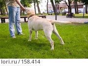 Боевая стойка охотничего пса. Стоковое фото, фотограф BART / Фотобанк Лори
