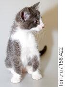 Котёнок. Стоковое фото, фотограф BART / Фотобанк Лори