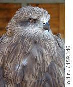 Купить «Хищник», фото № 159146, снято 27 октября 2007 г. (c) Карелин Д.А. / Фотобанк Лори