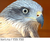 Купить «Хищник», фото № 159150, снято 27 октября 2007 г. (c) Карелин Д.А. / Фотобанк Лори