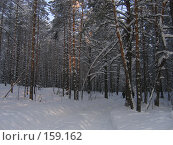 Купить «Зимний лес», фото № 159162, снято 13 февраля 2006 г. (c) Карелин Д.А. / Фотобанк Лори