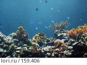 Купить «Подводный мир», фото № 159406, снято 17 августа 2007 г. (c) Карасева Екатерина Олеговна / Фотобанк Лори