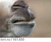 Купить «Верблюд», фото № 161650, снято 14 июня 2004 г. (c) Морозова Татьяна / Фотобанк Лори