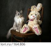 Купить «Кот на стуле», фото № 164806, снято 20 декабря 2007 г. (c) Морозова Татьяна / Фотобанк Лори