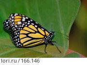 Купить «Бабочка с желтыми крыльями в черном обрамлении на листе», фото № 166146, снято 2 января 2008 г. (c) Александр Чураков / Фотобанк Лори