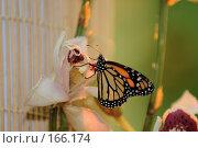 Купить «Бабочка желто-черно-оранжевая в интерьере помещения», фото № 166174, снято 2 января 2008 г. (c) Александр Чураков / Фотобанк Лори