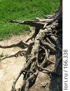 Купить «Корни», фото № 166338, снято 19 мая 2007 г. (c) Алембатров Алексей / Фотобанк Лори
