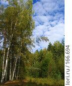 Купить «Берёзы», фото № 166694, снято 6 сентября 2005 г. (c) Карелин Д.А. / Фотобанк Лори